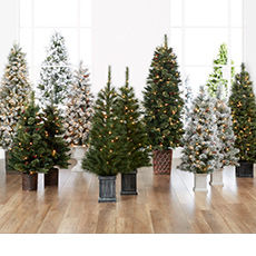 Save on all urn trees