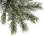 7 Foot Whistler Pre Lit Chasmere Artificial Christmas Tree with Clear Lights Close Up Detail Silo Image