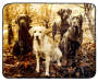 ARCTIC TRAIL THROW HUNTING DOGS BTC 17