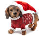 Christmas Dachshund with Sweater Angled View Silo Image