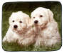 Golden Puppies Throw Blanket Overhead View Silo Image