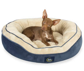 Serta Navy Amp Cream Memory Foam Oval Nest Pet Bed 25 Quot X 21 Quot Big Lots