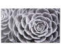 Succulent Canvas Art 22 Inches by 38 Inches Overhead View Silo Image