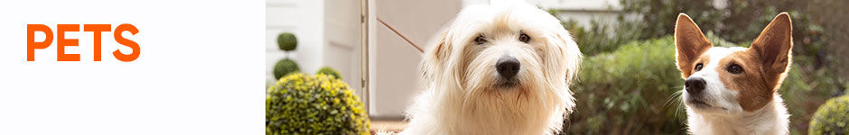 Affordable Pet Supplies for Dogs, Cats & More | Big Lots