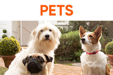 fad34d4f98642 Save on Pet Supplies at Big Lots · Dog Supplies