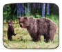 ARCTIC TRAIL THROW BEARS 19
