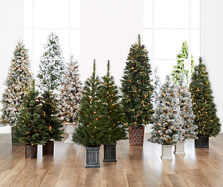 Christmas Trees with Urns   Big Lots