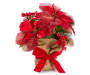 Red Berry Poinsettia with Burlap Pot Front View Silo Image