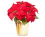 Red Glitter Artificial Poinsettia Gold Foil Pot silo front