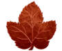 Rust Orange Velvet Leaf Placemat silo front